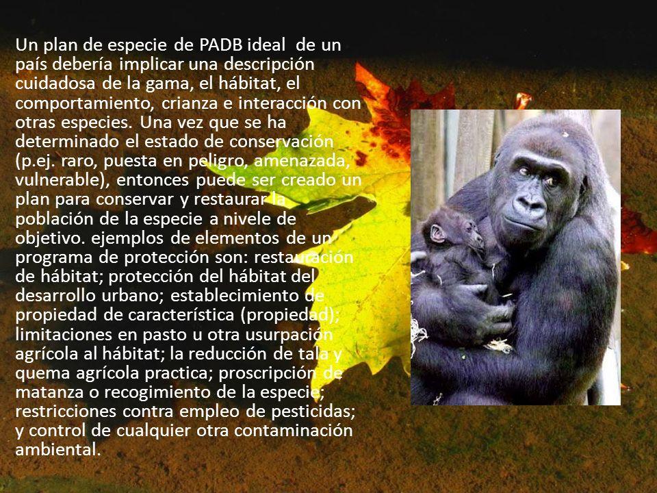 Un plan de especie de PADB ideal de un país debería implicar una descripción cuidadosa de la gama, el hábitat, el comportamiento, crianza e interacció