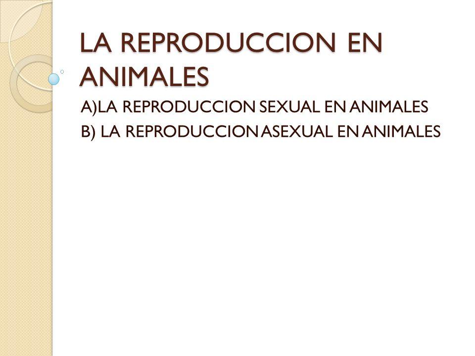 Reproducción sexual La reproducción sexual es el modo más habitual de reproducción que realizan los animales.