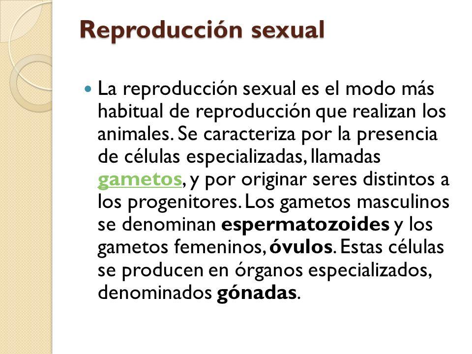 Los testículos son las gónadas que producen espermatozoides.