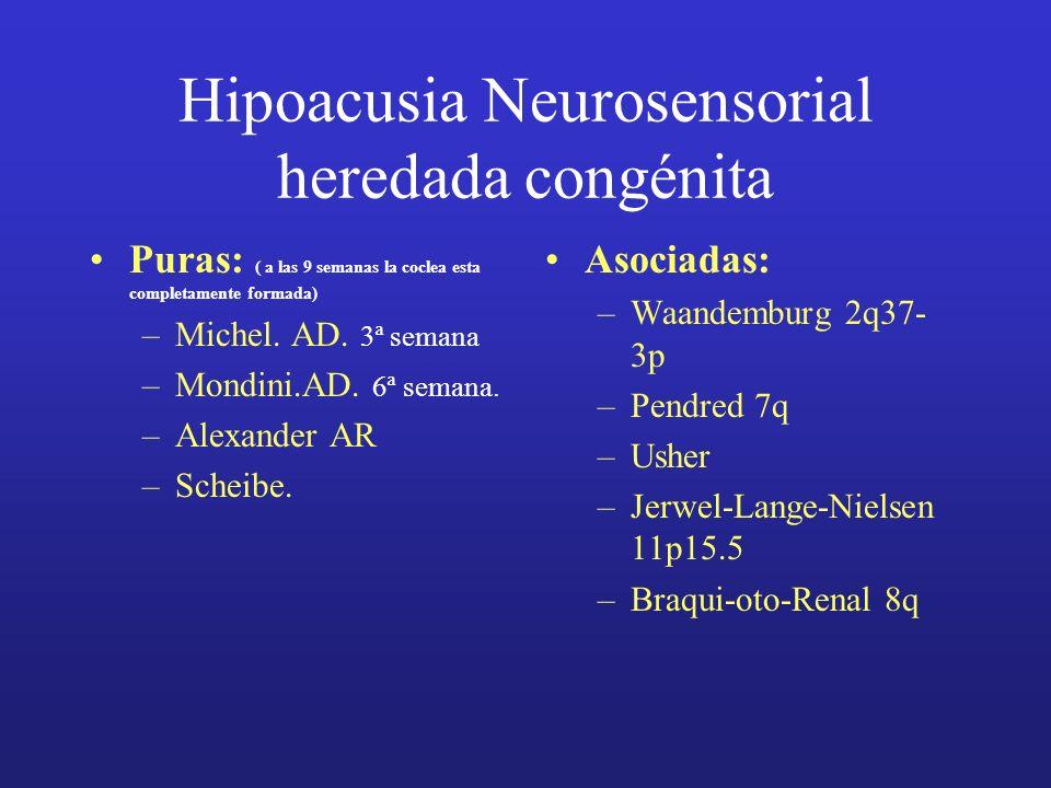 Hipoacusia Neurosensorial heredada congénita Puras: ( a las 9 semanas la coclea esta completamente formada) –Michel. AD. 3ª semana –Mondini.AD. 6ª sem
