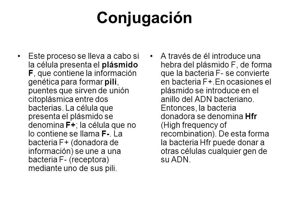Conjugación Este proceso se lleva a cabo si la célula presenta el plásmido F, que contiene la información genética para formar pili, puentes que sirve