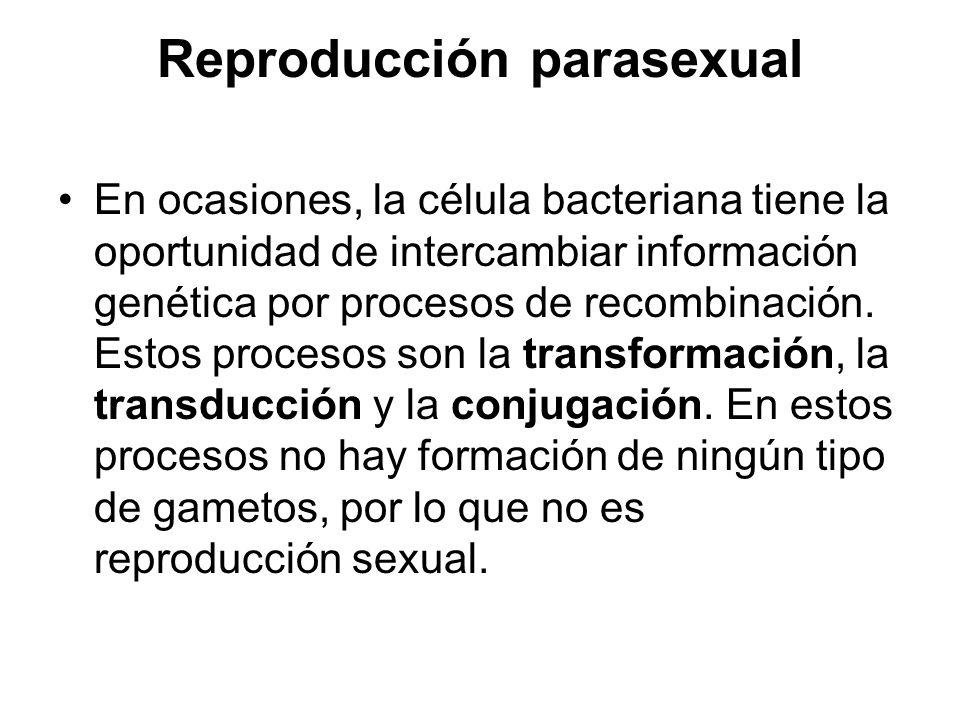 Reproducción parasexual En ocasiones, la célula bacteriana tiene la oportunidad de intercambiar información genética por procesos de recombinación. Es