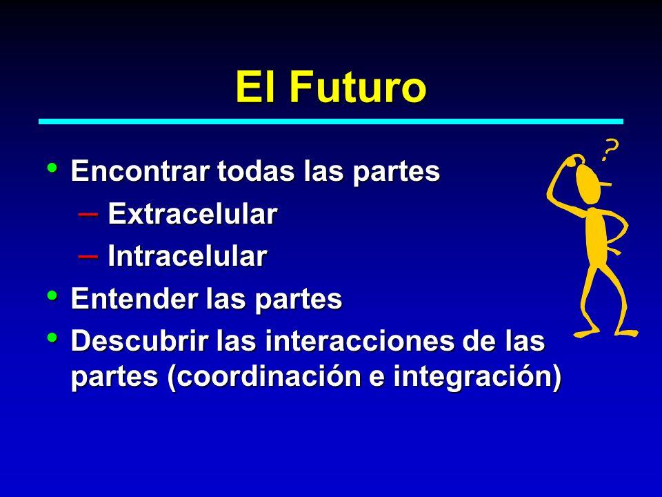 El Futuro Encontrar todas las partes Encontrar todas las partes – Extracelular – Intracelular Entender las partes Entender las partes Descubrir las in