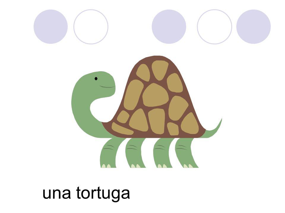 una tortuga