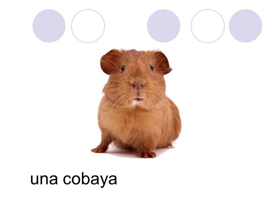 una cobaya