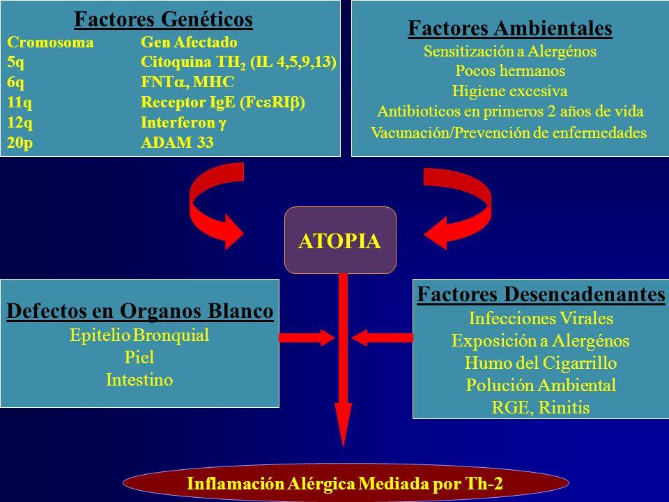Factores Genéticos CromosomaGen Afectado 5qCitoquina TH 2 (IL 4,5,9,13) 6qFNT, MHC 11qReceptor IgE (Fc RI ) 12qInterferon 20pADAM 33 Factores Ambienta