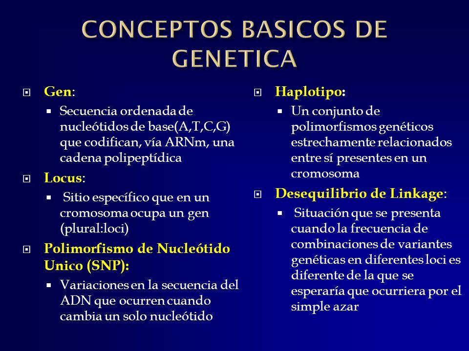 Gen : Secuencia ordenada de nucleótidos de base(A,T,C,G) que codifican, vía ARNm, una cadena polipeptídica Locus : Sitio específico que en un cromosom