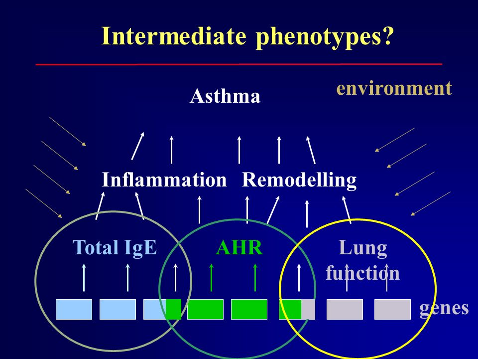 genes Asthma environment Intermediate phenotypes? Total IgEAHRLung function InflammationRemodelling