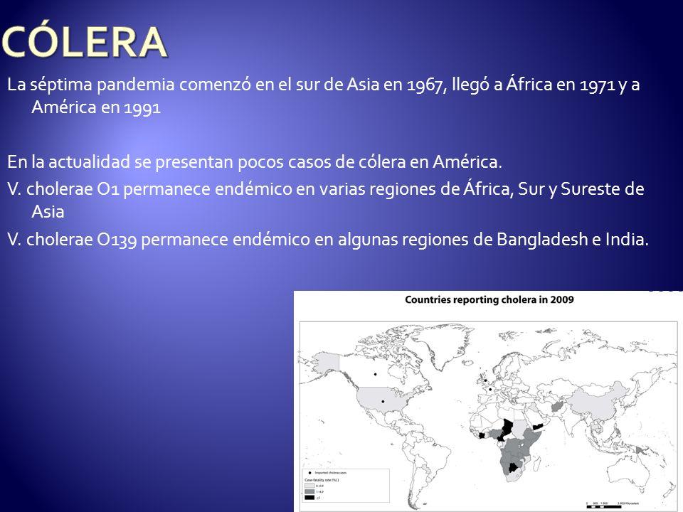 La séptima pandemia comenzó en el sur de Asia en 1967, llegó a África en 1971 y a América en 1991 En la actualidad se presentan pocos casos de cólera
