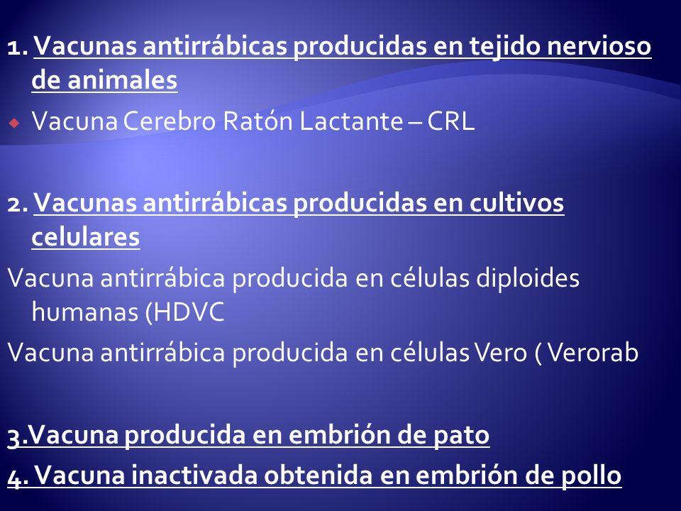 1. Vacunas antirrábicas producidas en tejido nervioso de animales Vacuna Cerebro Ratón Lactante – CRL 2. Vacunas antirrábicas producidas en cultivos c