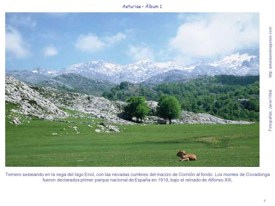 Fotografías: Javier Vidal http: asturiasenimagenes.com 4 Asturias - Älbum 1 Ternero sesteando en la vega del lago Enol, con las nevadas cumbres del ma