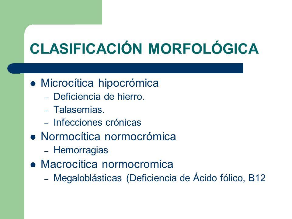 CLASIFICACIÓN MORFOLÓGICA Microcítica hipocrómica – Deficiencia de hierro. – Talasemias. – Infecciones crónicas Normocítica normocrómica – Hemorragias