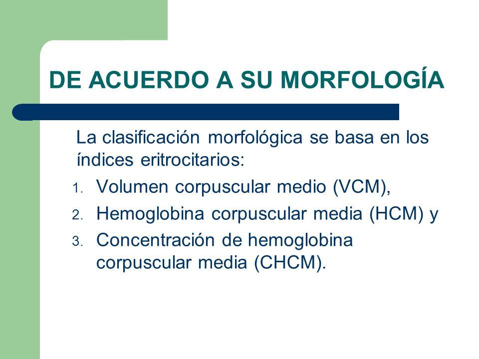 DE ACUERDO A SU MORFOLOGÍA La clasificación morfológica se basa en los índices eritrocitarios: 1. Volumen corpuscular medio (VCM), 2. Hemoglobina corp