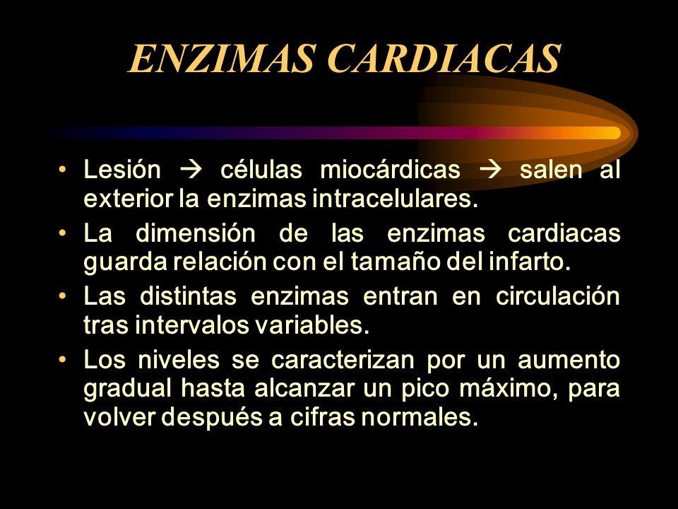 ENZIMAS CARDIACAS Lesión células miocárdicas salen al exterior la enzimas intracelulares. La dimensión de las enzimas cardiacas guarda relación con el
