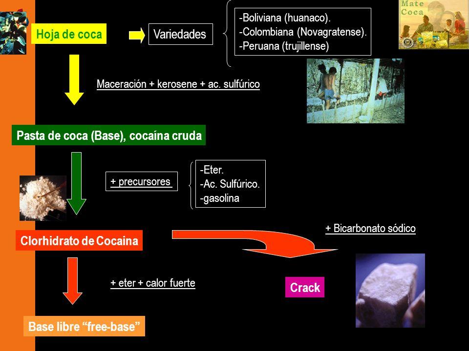 Variedades -Boliviana (huanaco). -Colombiana (Novagratense). -Peruana (trujillense) + precursores -Eter. -Ac. Sulfúrico. -gasolina Clorhidrato de Coca