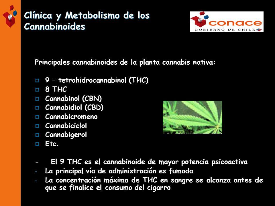Clínica y Metabolismo de los Cannabinoides Principales cannabinoides de la planta cannabis nativa: 9 – tetrohidrocannabinol (THC) 8 THC Cannabinol (CB