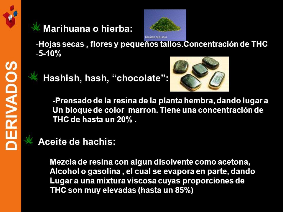 -Hojas secas, flores y pequeños tallos.Concentración de THC -5-10% Marihuana o hierba: Hashish, hash, chocolate: -Prensado de la resina de la planta h