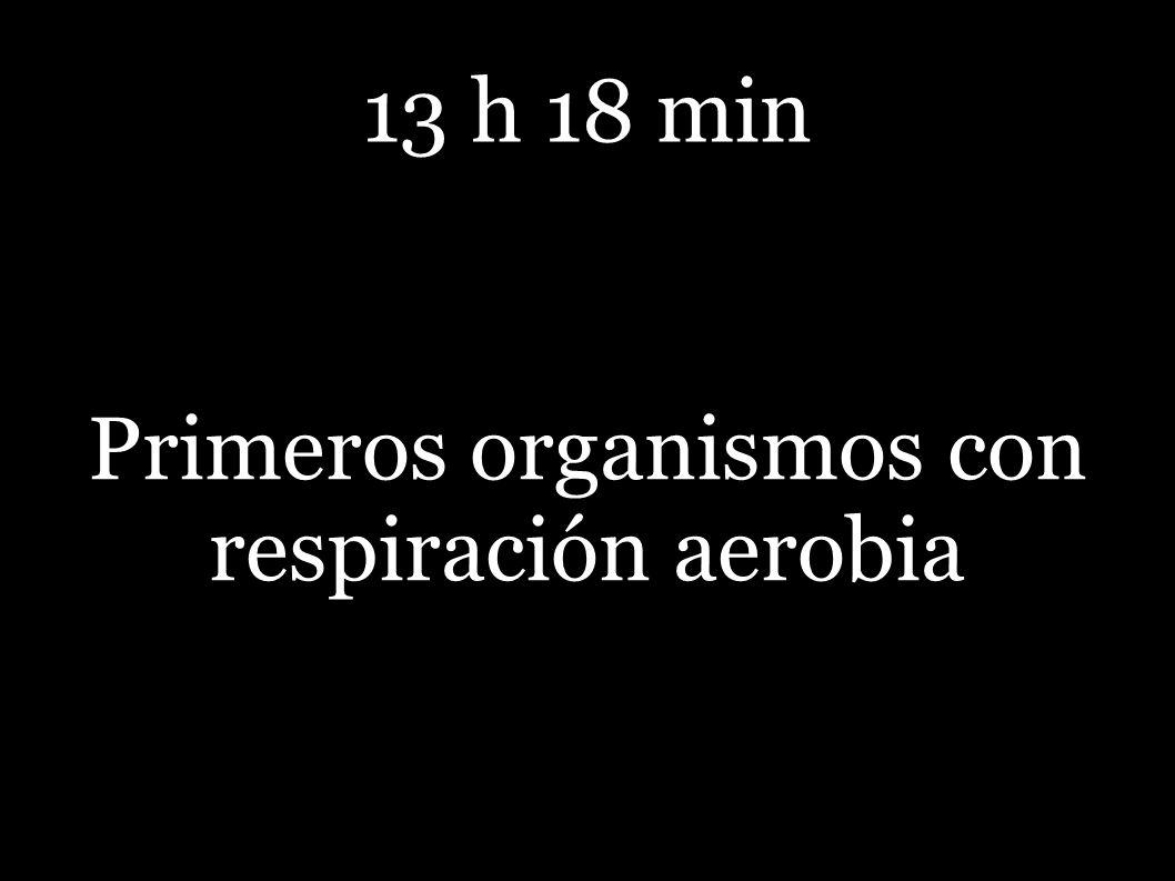 13 h 18 min Primeros organismos con respiración aerobia