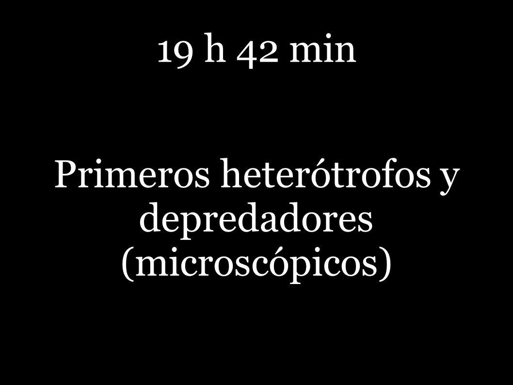 19 h 42 min Primeros heterótrofos y depredadores (microscópicos)