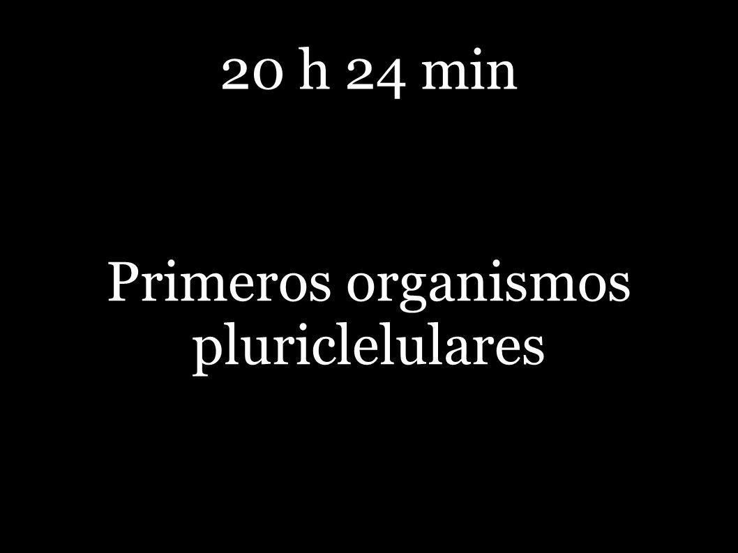 20 h 24 min Primeros organismos pluriclelulares