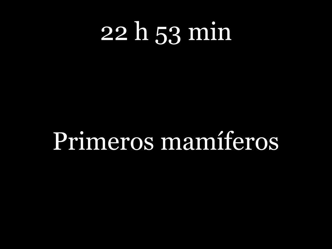 22 h 53 min Primeros mamíferos