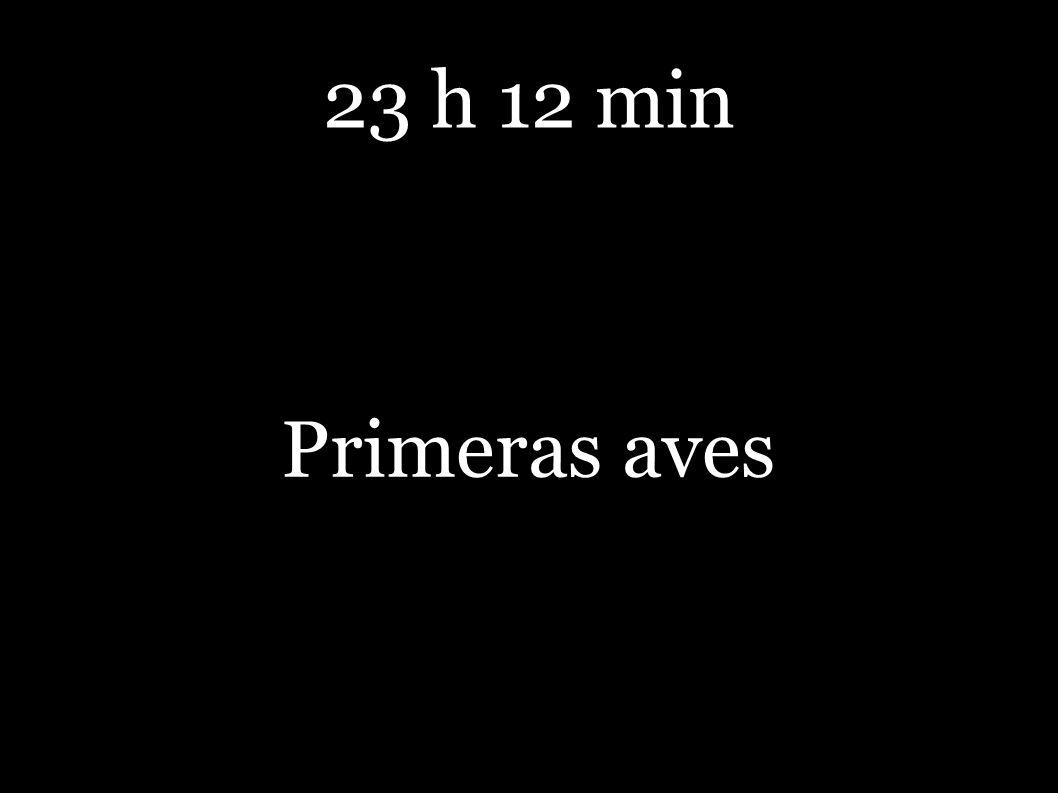 23 h 12 min Primeras aves