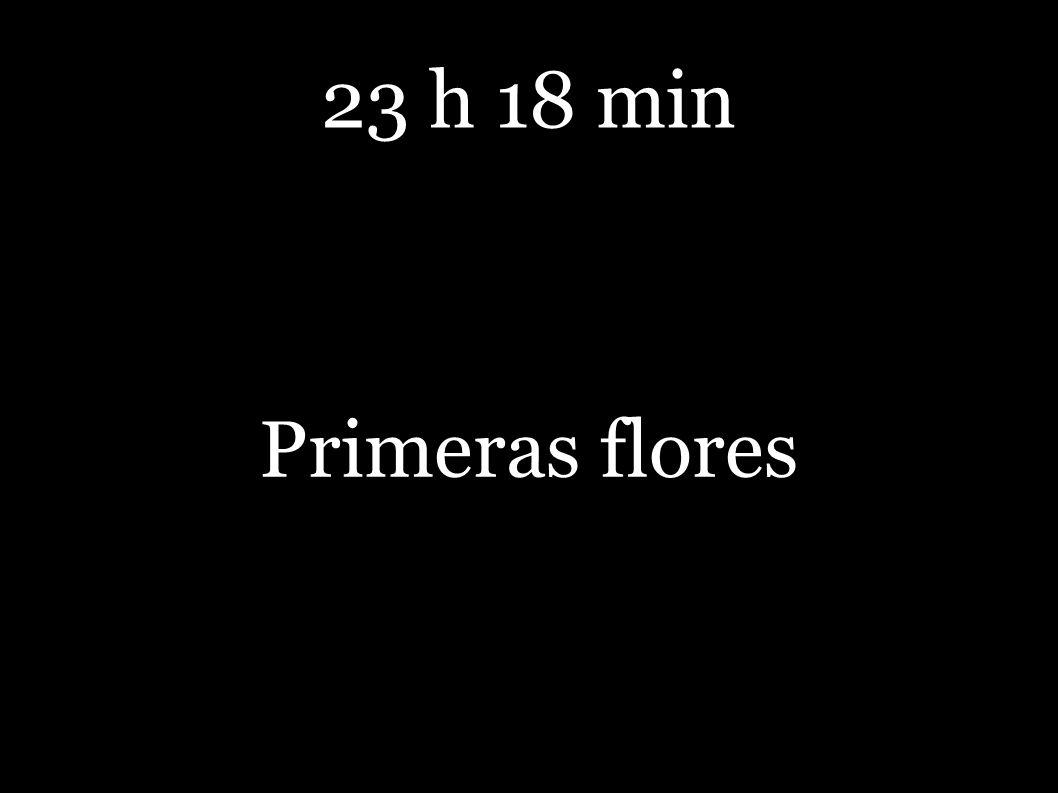 23 h 18 min Primeras flores