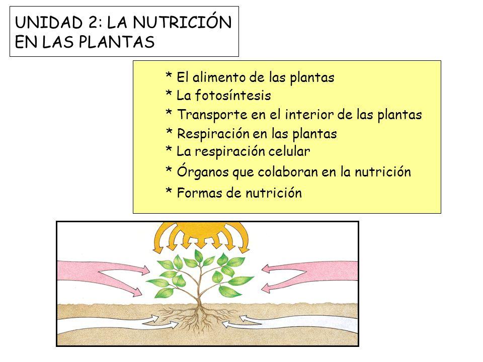 UNIDAD 2: LA NUTRICIÓN EN LAS PLANTAS * El alimento de las plantas * La fotosíntesis * Transporte en el interior de las plantas * Respiración en las p