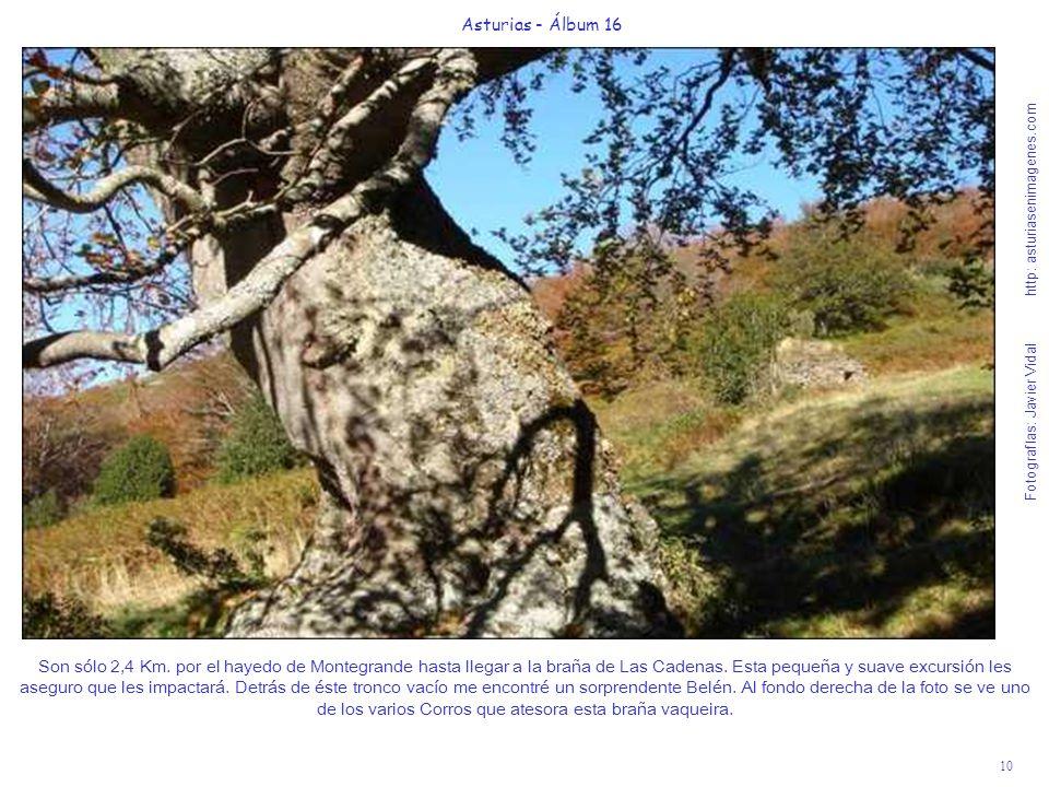 10 Asturias - Álbum 16 Fotografías: Javier Vidal http: asturiasenimagenes.com Son sólo 2,4 Km. por el hayedo de Montegrande hasta llegar a la braña de