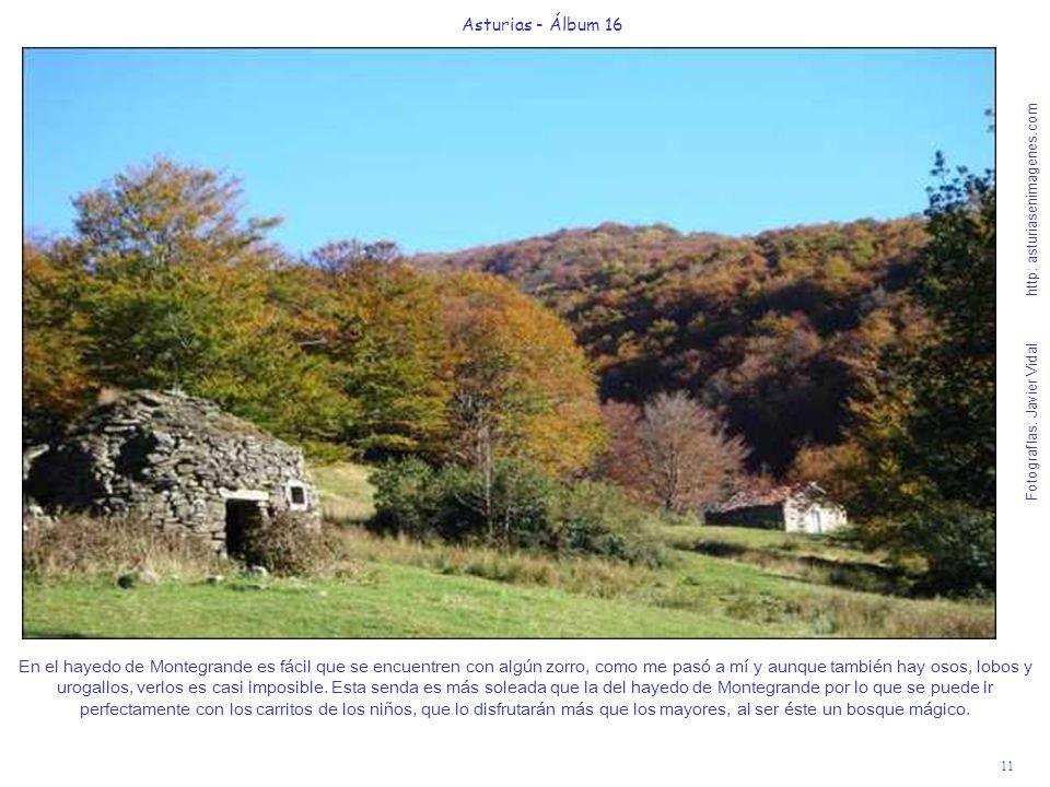 11 Asturias - Álbum 16 Fotografías: Javier Vidal http: asturiasenimagenes.com En el hayedo de Montegrande es fácil que se encuentren con algún zorro,