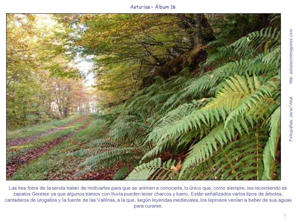 7 Asturias - Álbum 16 Fotografías: Javier Vidal http: asturiasenimagenes.com Las tres fotos de la senda tratan de motivarles para que se animen a cono