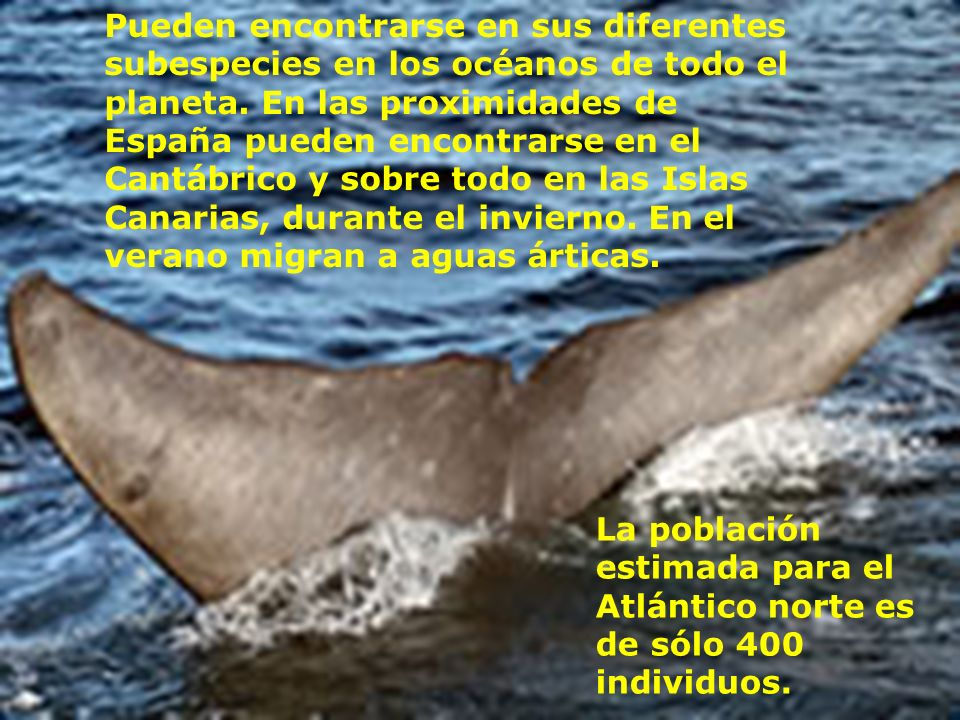 Pueden encontrarse en sus diferentes subespecies en los océanos de todo el planeta. En las proximidades de España pueden encontrarse en el Cantábrico