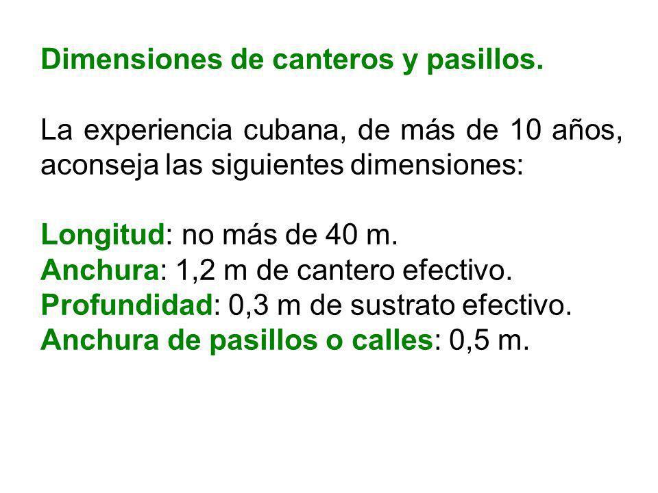 Dimensiones de canteros y pasillos. La experiencia cubana, de más de 10 años, aconseja las siguientes dimensiones: Longitud: no más de 40 m. Anchura: