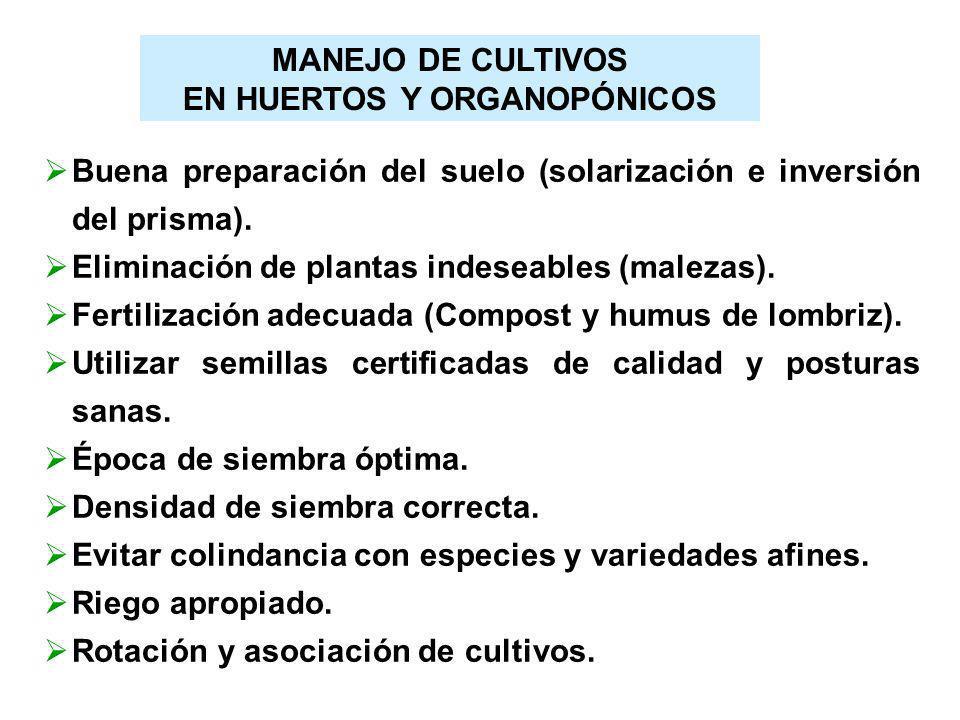 MANEJO DE CULTIVOS EN HUERTOS Y ORGANOPÓNICOS Buena preparación del suelo (solarización e inversión del prisma). Eliminación de plantas indeseables (m