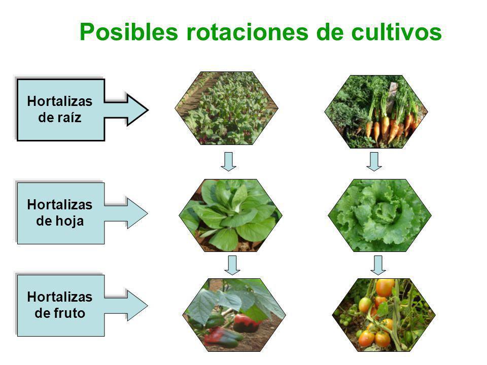 Posibles rotaciones de cultivos Hortalizas de raíz Hortalizas de fruto Hortalizas de hoja