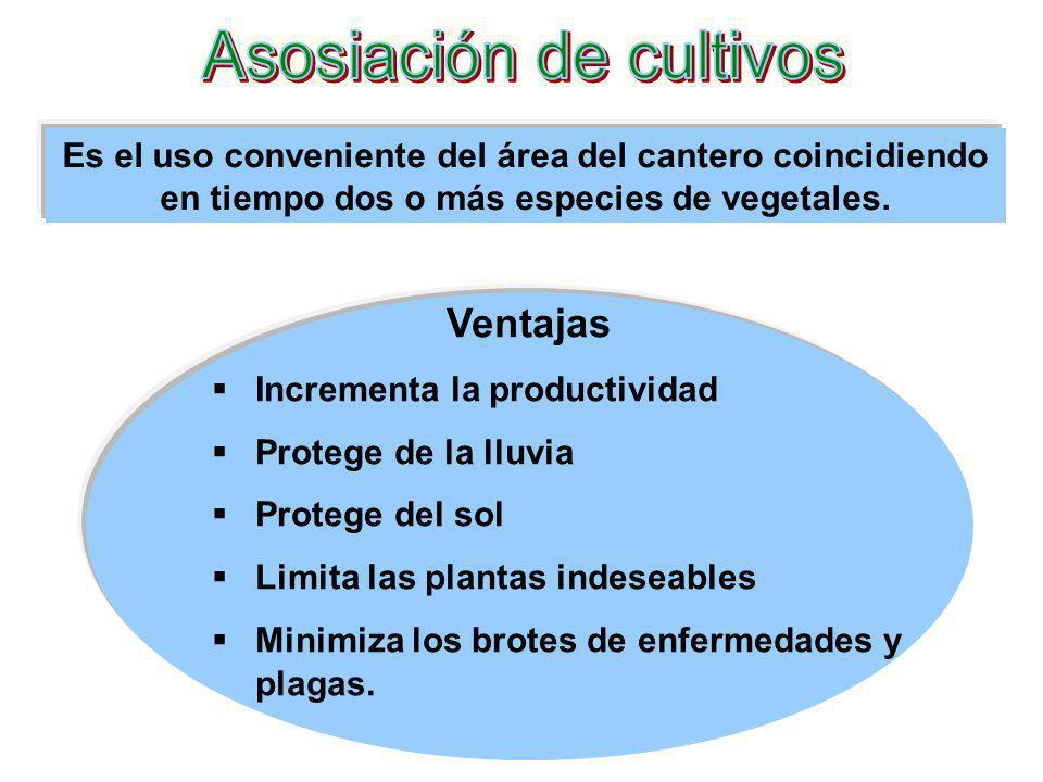 Es el uso conveniente del área del cantero coincidiendo en tiempo dos o más especies de vegetales. Ventajas Incrementa la productividad Protege de la