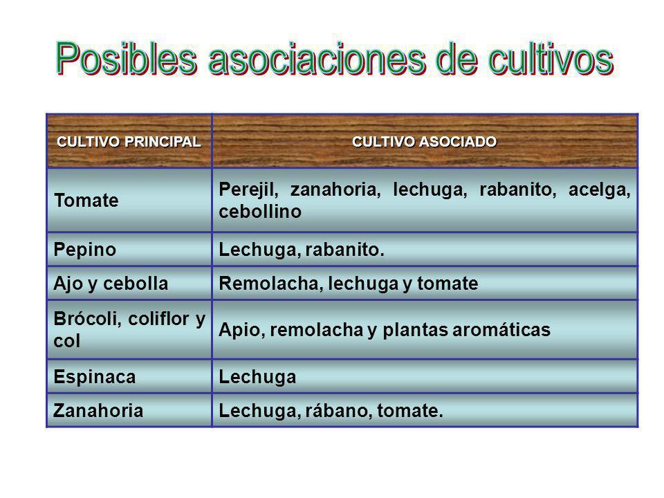 CULTIVO PRINCIPAL CULTIVO ASOCIADO Tomate Perejil, zanahoria, lechuga, rabanito, acelga, cebollino PepinoLechuga, rabanito. Ajo y cebollaRemolacha, le