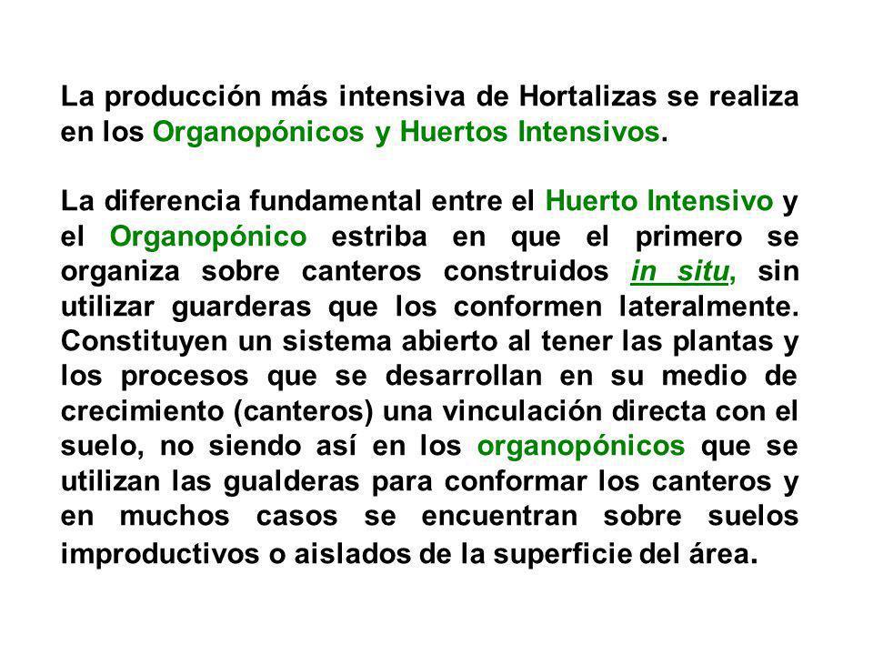La producción más intensiva de Hortalizas se realiza en los Organopónicos y Huertos Intensivos. La diferencia fundamental entre el Huerto Intensivo y