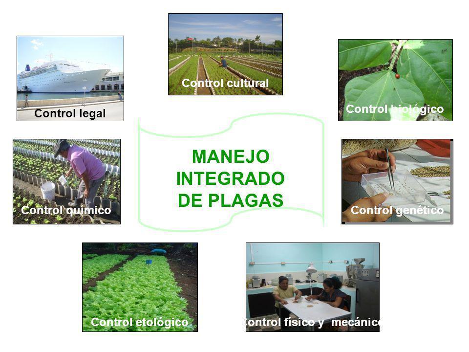 Control cultural Control biológico Control genético Control físico y mecánicoControl etológico Control químico Control legal MANEJO INTEGRADO DE PLAGA