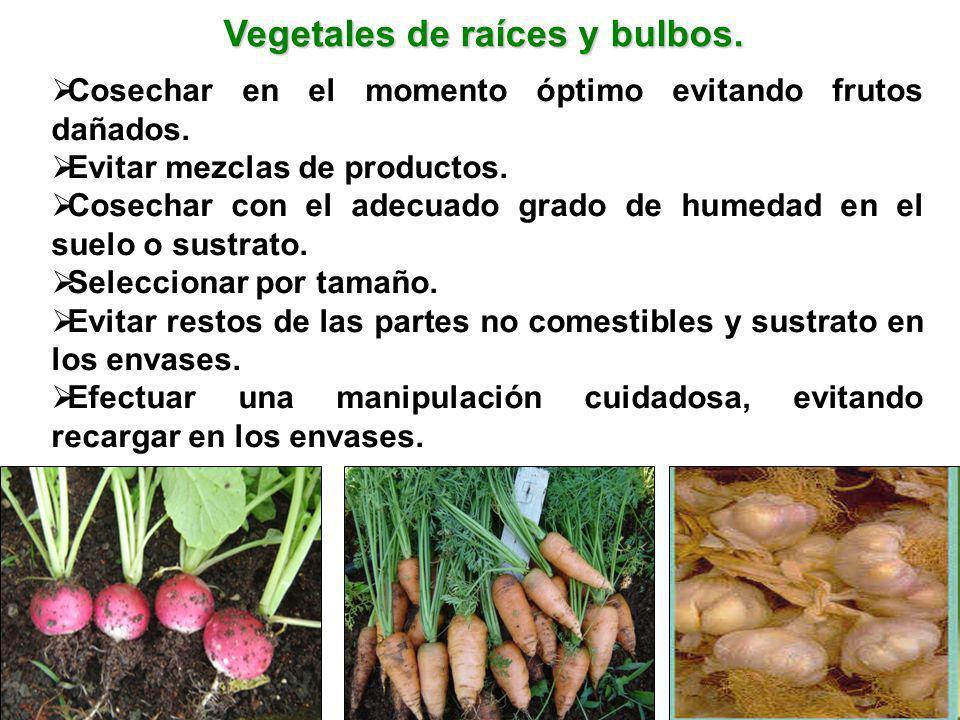 Vegetales de raíces y bulbos. Cosechar en el momento óptimo evitando frutos dañados. Evitar mezclas de productos. Cosechar con el adecuado grado de hu