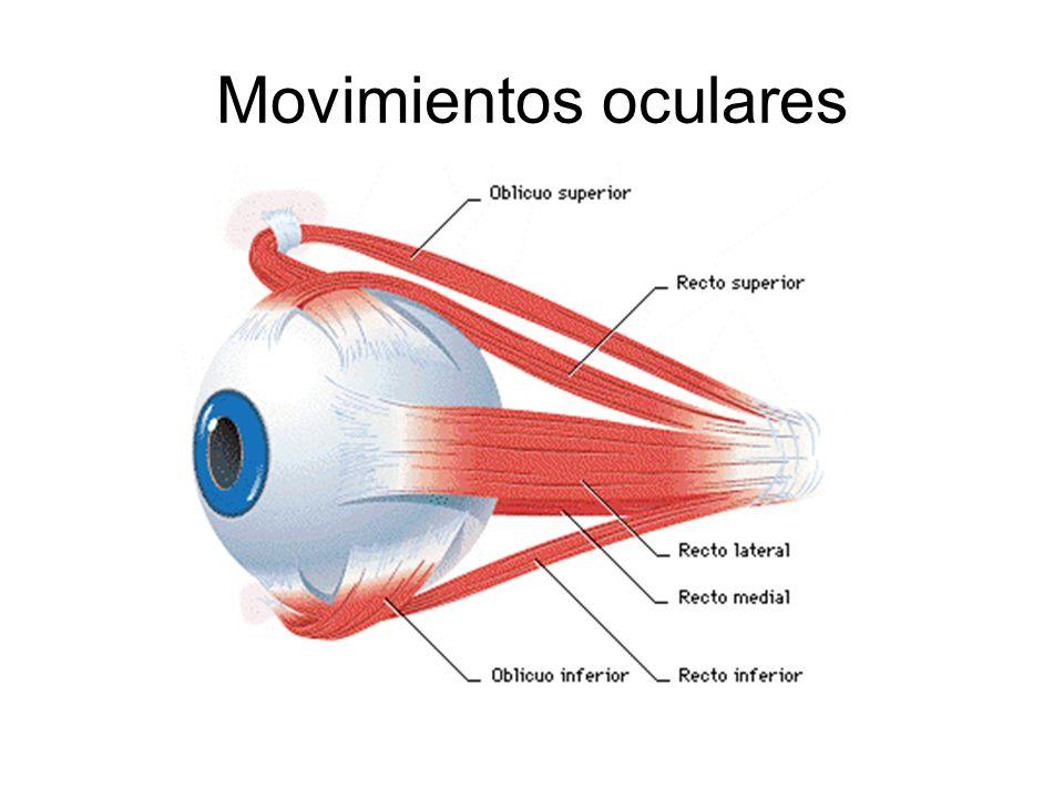 Movimientos oculares