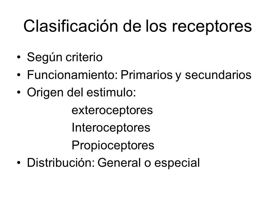 Clasificación de los receptores Según criterio Funcionamiento: Primarios y secundarios Origen del estimulo: exteroceptores Interoceptores Propioceptor