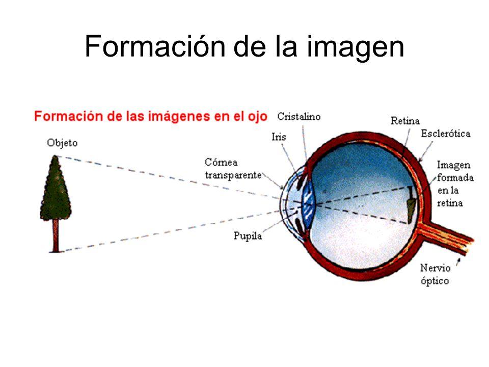Formación de la imagen