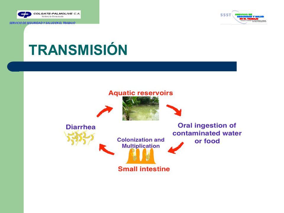 TRANSMISIÓN Una persona puede adquirir cólera bebiendo agua o comiendo alimentos contaminados con la bacteria del cólera.