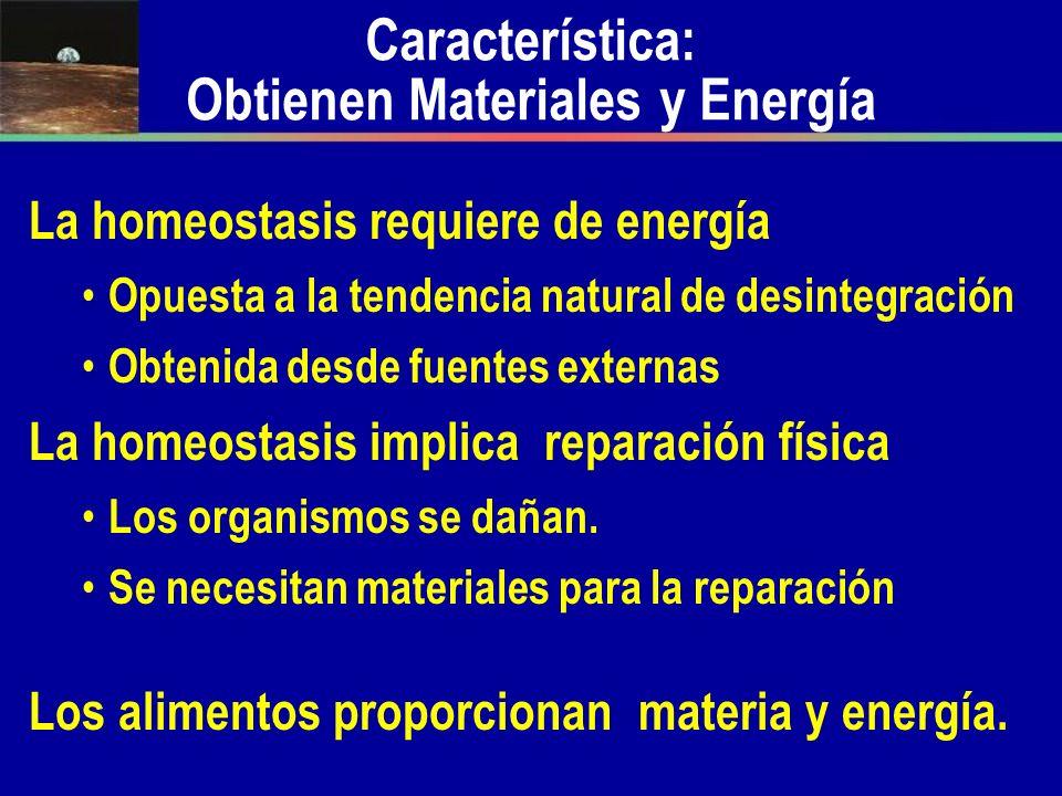Característica: Obtienen Materiales y Energía La homeostasis requiere de energía Opuesta a la tendencia natural de desintegración Obtenida desde fuent