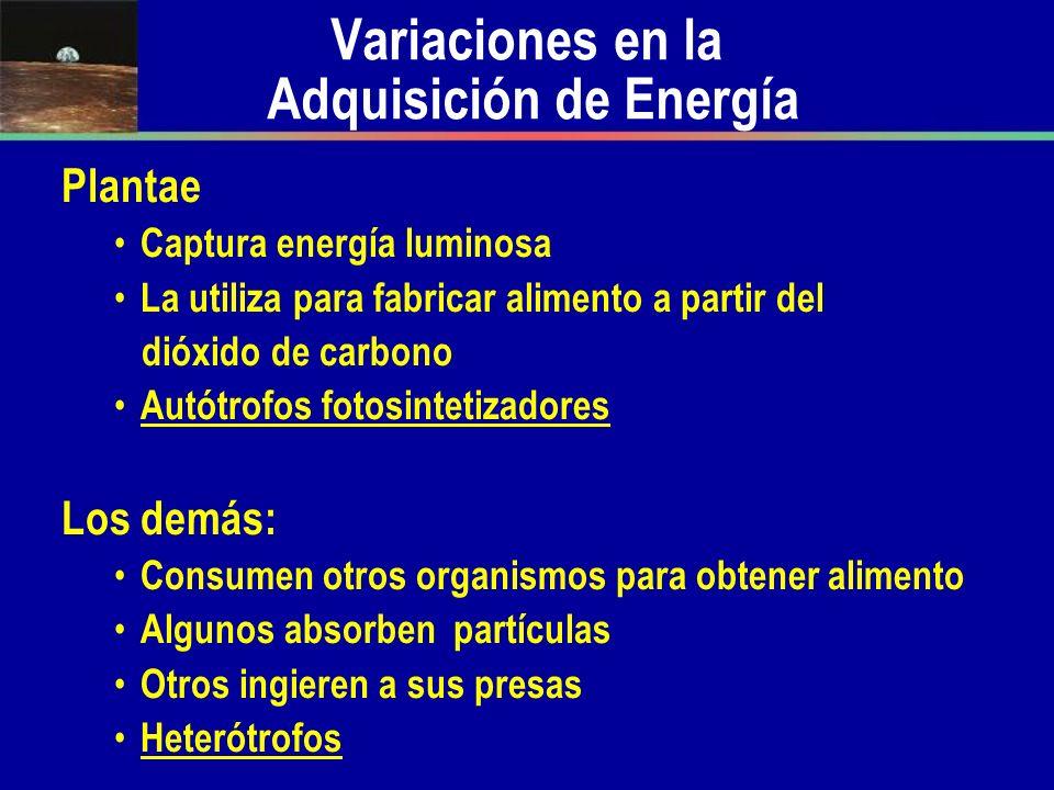 Variaciones en la Adquisición de Energía Plantae Captura energía luminosa La utiliza para fabricar alimento a partir del dióxido de carbono Autótrofos