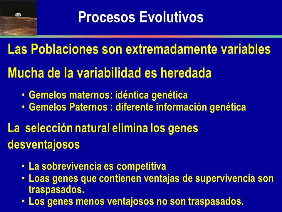 Procesos Evolutivos Las Poblaciones son extremadamente variables Mucha de la variabilidad es heredada Gemelos maternos: idéntica genética Gemelos Pate