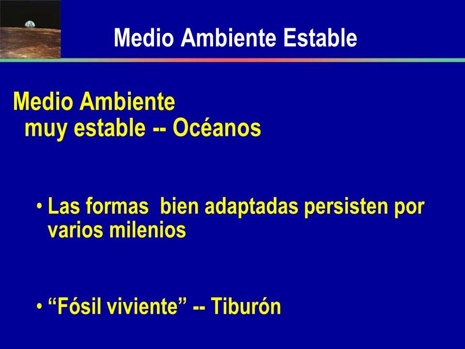 Medio Ambiente Estable Medio Ambiente muy estable -- Océanos Las formas bien adaptadas persisten por varios milenios Fósil viviente -- Tiburón