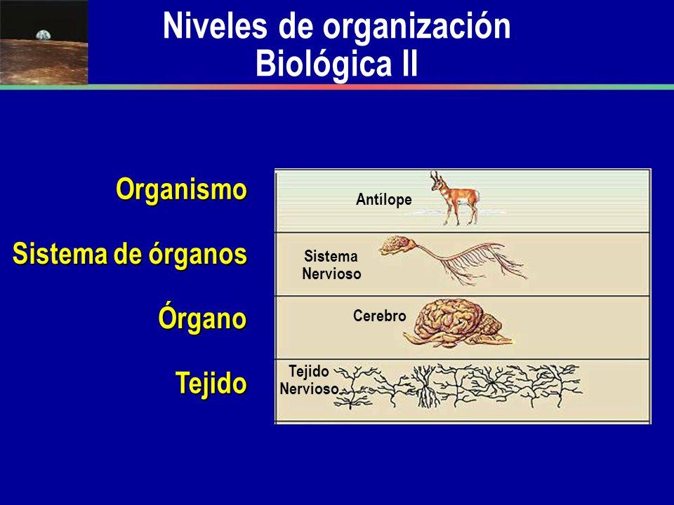 Niveles de Organización Biológica III Población Rebaño de antílopes Halcón Agua Superficie Terrestre Comunidad Ecosistema Biosfera Antílopes Halcón Pasto Antílopes Serpiente Arbustos Suelo Aire Serpiente
