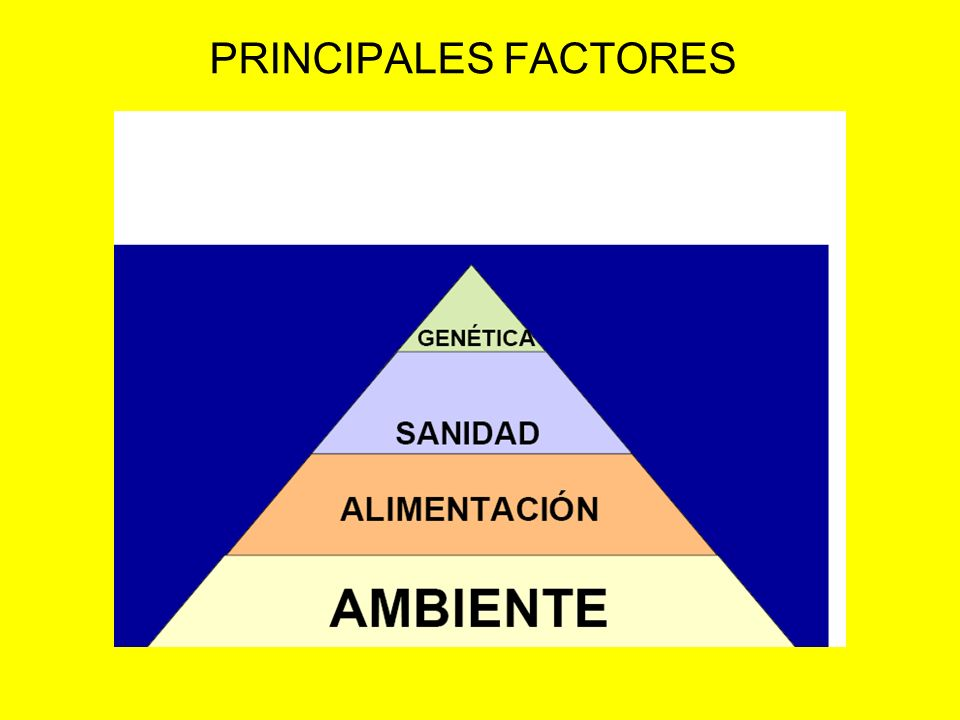PRINCIPALES FACTORES